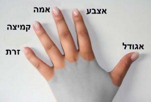 ככה שהמרחק בין הקמיצה לאצבע המורה גדול יותר איבר המין גדול יותר